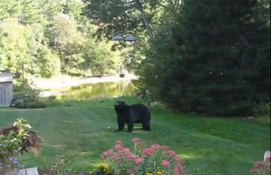 A fearless woman scolded a giant bear that invaded her home chasing it out of her porch in the latest video that has gone viral on YouTube.