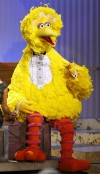 Sesame Street character Big Bird sits onstage before accepting a lifetime achievement award at the 36th Annual Daytime Emmy Awards at the Orpheum Theatre in Los Angeles in this August 30, 2009 file ph