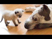 Dog Meet Kitten For The First Time