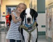 Great Dane Taught Little Girl With Rare Genetic Disorder How To Walk