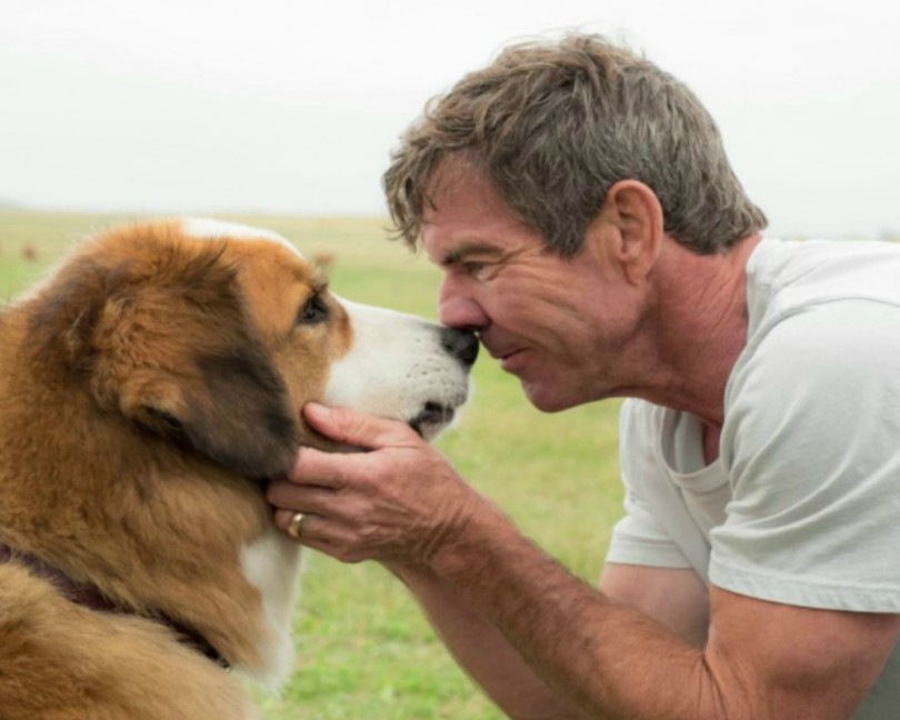 blog premiere dogs purpose cancelled