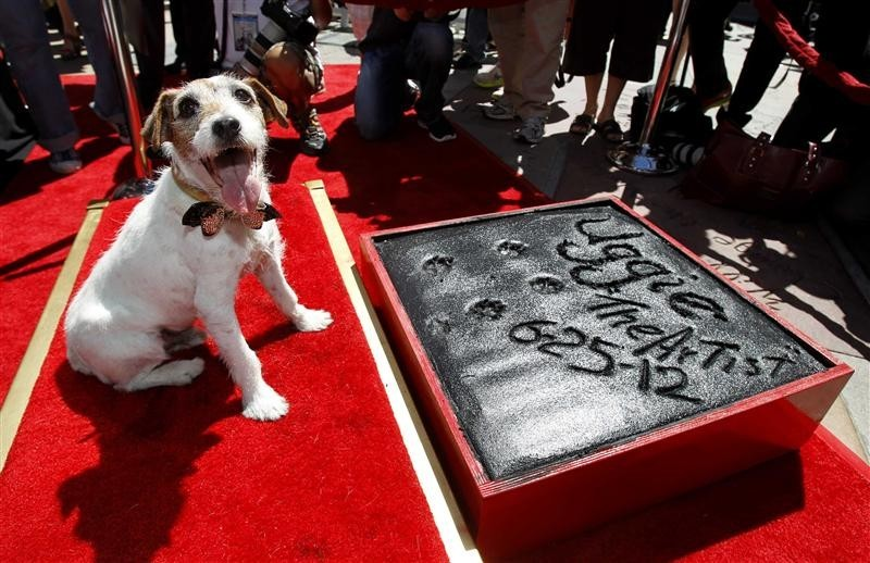 "The dog Uggie, featured in the film ""The Artist"", is pictured after leaving his paw prints in cement in the forecourt of the Grauman's Chinese theatre in Hollywood, California June 25, 2012."